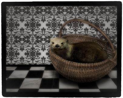 otter sample 2