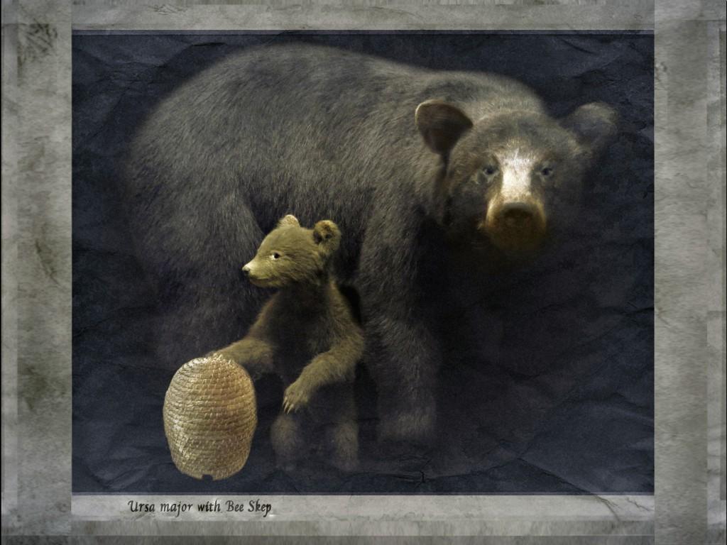 bears 8x6