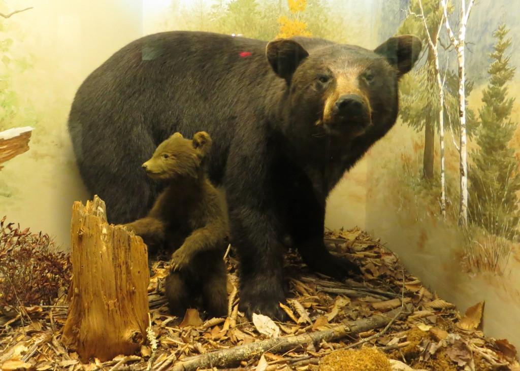 bears ns
