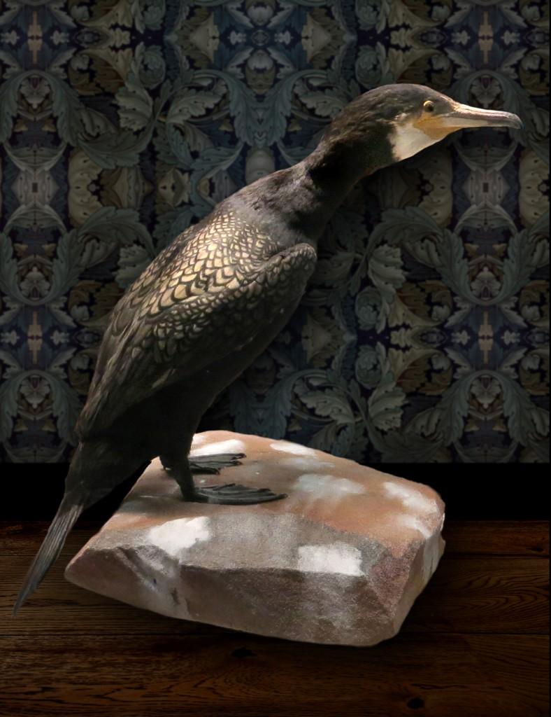 cormorant row