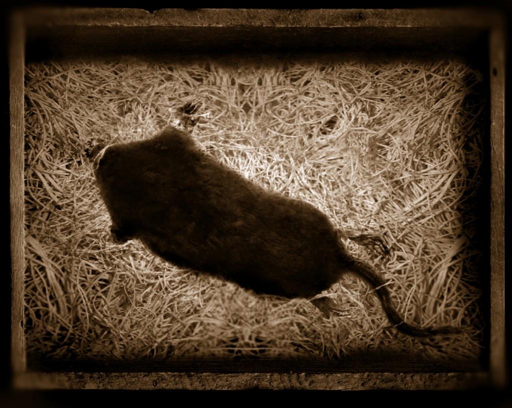 mole row