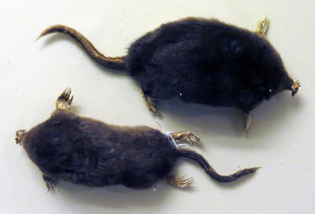 moles 4x6